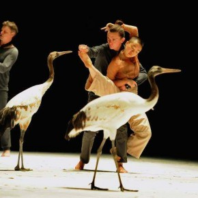 « Light Bird », de Marilén Iglesias-Breuker et Luc Petton, Théâtre National de Chaillot